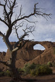 Arches and trees Royalty Free Stock Images