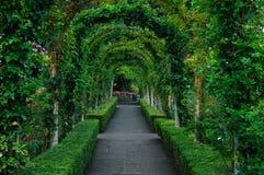 Archi e percorso del roseto Immagini Stock Libere da Diritti