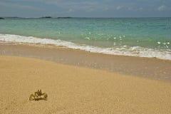 archibald螃蟹 库存图片