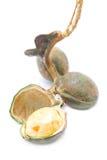 Archidendron Jiringa Nielsen, υγιή τοπικά φρούτα. Στοκ φωτογραφίες με δικαίωμα ελεύθερης χρήσης