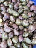 Archidendron pauciflorum or Djenkol or Dogfruit or Ngapi nut or Luk nieng. Stock Photo