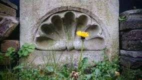 Architecrural molding and dandelion flower. Stock Images