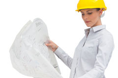 Architect looking at plan Stock Images
