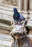 Architectonic detail with a pigeon Stock Photography