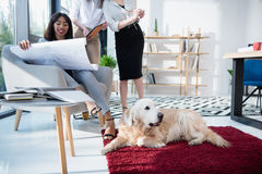 Architects in formal wear working with blueprint while dog lying on carpet. At office Royalty Free Stock Photo