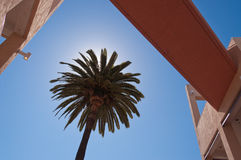 Architectural detail and palmtree Royalty Free Stock Photo