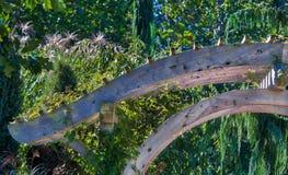 Architecturale boogmanier in een tuin van wonder Royalty-vrije Stock Foto's