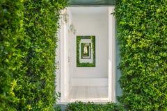 Architecture abstraite d'image du tunnel du mur blanc couvert de lierre vert photo libre de droits