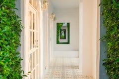 Architecture abstraite d'image du tunnel du mur blanc couvert de lierre vert photo stock