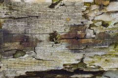 Old rotten board texture jpg. Architecture,backdrop,background,block,board,brick,brown,design,grunge,material,old,pattern,rotten,rough,structure,texture,textured stock photo
