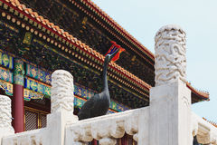 Architecture in details in China Beijing Forbidden city Royalty Free Stock Photos