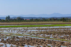 Architecture farming in Asia rice field Stock Photography