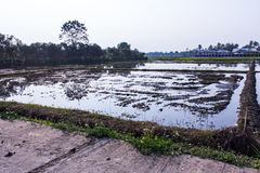 Architecture farming in Asia rice field Royalty Free Stock Images