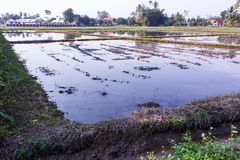 Architecture farming in Asia rice field Royalty Free Stock Photography