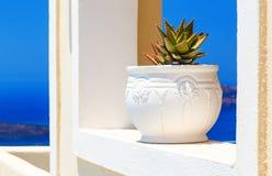 Architecture grecque de Cyclades d'île avec le cactus dans la véranda avec des voûtes au-dessus de vue de santorini de la mer Méd Images libres de droits