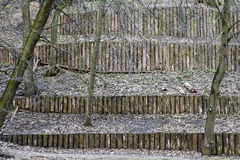 Architecture of logs in the park. The dam of logs in the park. Architecture of logs in the park Stock Image