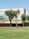 Architektur drzewka palmowe i nowożytny budynek zdjęcia royalty free
