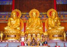 Architektur mit drei Buddha-Goldstatuen-Chinesen Lizenzfreies Stockfoto