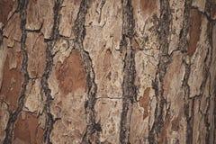 architektury budowy projekta ekologicznej tarcicy materialni sosnowi purposes texture drewno zdjęcie royalty free