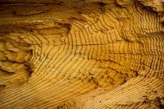 architektury budowy projekta ekologicznej tarcicy materialni sosnowi purposes texture drewno zdjęcia stock