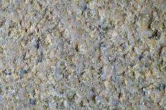 architektury tła zakończenia szczegółu kamienia tekstura zamknięty kwiatu komarnicy macro target4726_0_ zamknięty obrazy stock