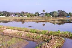 Architettura che coltiva nel giacimento del riso dell'Asia Immagini Stock