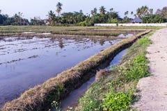 Architettura che coltiva nel giacimento del riso dell'Asia Fotografia Stock