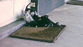 Archivalisch von den Kätzchen mit Mutterkatze stock video