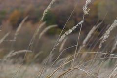 Archivato dell'autunno Fotografie Stock