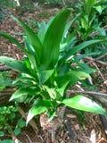 Archivbild der wild wachsenden Pflanze Stockbild