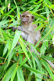 Archivbild des Affen auf einem Baum Lizenzfreie Stockbilder