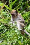 Archivbild des Affen auf einem Baum Lizenzfreie Stockfotos