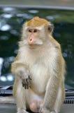 Archivbild des Affen auf einem Baum Stockfotos
