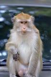 Archivbild des Affen auf einem Baum Stockbild