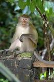 Archivbild des Affen auf einem Baum Stockfoto
