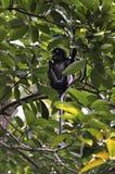 Archivbild des Affen auf einem Baum Stockfotografie