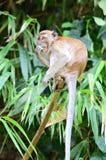 Archivbild des Affen auf einem Baum Stockbilder