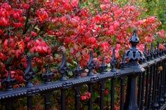 Archivbild des Herbstlaubs an allgemeinem Garten Bostons Stockbild