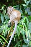 Archivbild eines Affen auf einem Baum Lizenzfreie Stockfotos