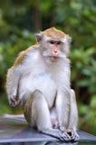 Archivbild eines Affen auf einem Baum Lizenzfreie Stockbilder