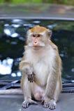 Archivbild eines Affen auf einem Baum Lizenzfreies Stockfoto