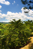 Archivbild von Croydon-Plantage, Jamaika Lizenzfreies Stockbild