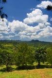 Archivbild von Croydon-Plantage, Jamaika Stockfotografie