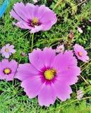 Archiviert auf Blumen lizenzfreies stockfoto