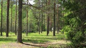 Archivio pronto del bello ciclo della foresta archivi video