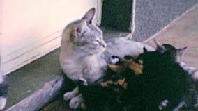 Archivistique des chatons avec le chat de mère banque de vidéos
