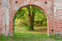 Archway. In a cloister with an old tree in background Stock Images