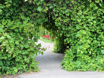 Archway with climbing vine Royalty Free Stock Photos