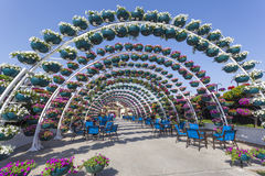 Archway made of flowers at the Miracle Garden in Dubai Stock Photography