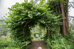 Archway Made of Leaves Stock Image